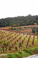 Minervois. Languedoc. Vineyards. France. Europe.