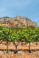 Domaine de l'Hortus. The Montagne Massif de l'Hortus mountain cliff. Pic St Loup. Languedoc. Mourvedre vines facing south. Terroir soil. France. Europe. Vineyard. Soil with stones rocks.