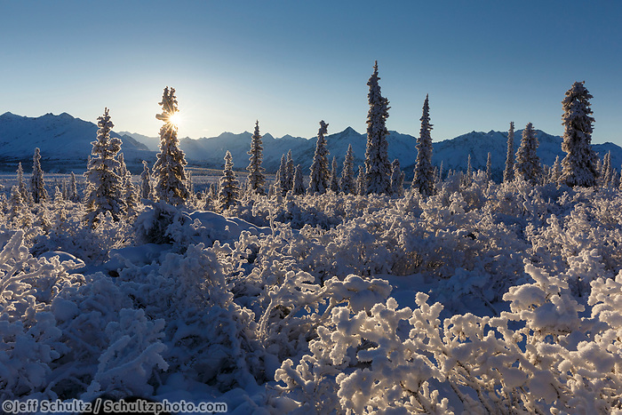 Winter landscape of snow and frost covered trees and willows with Chugach Mountains in the Sheep Mountain area of Southcentral Alaska <br /> <br /> Photo by Jeff Schultz/SchultzPhoto.com  (C) 2016  ALL RIGHTS RESVERVED