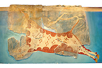 Mycenaean Fresco wall painting of a man leaping over a bull  from the Tiryns, Greece. 14th - 13th Century BC. Athens Archaeological Museum.