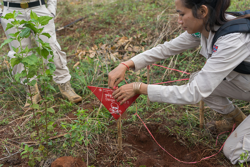 """April 27, 2017 - Banlung (Cambodia). J-Liv, a Belgian shepherd explosive detection dog, was able to sniff a """"bombie"""" inside a cassava field in the provincial capital Banlung. After the discovery, surveyor Sam Kol plants a sign to delimitate the contaminated area. The """"bombie"""" will be later removed and detonated together with the other remnants found in the field. © Thomas Cristofoletti / Ruom"""