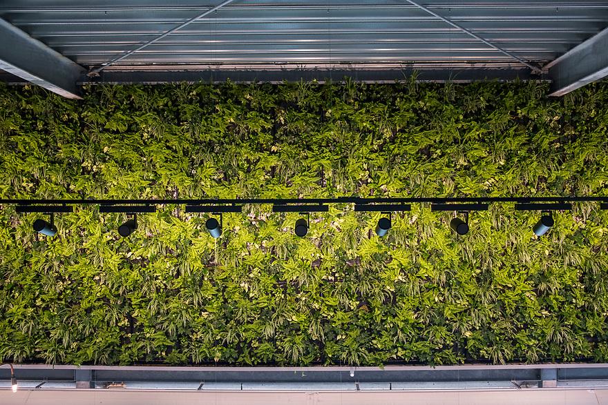 Nederland, Utrecht, 20180419<br /> The Green House, een duurzaam restaurant in Utrecht. Alle gebruikte materialen zijn gerecycled en op de bovenverdieping is een kas waar sla en kruiden worden geteeld. Dat scheelt een grote koeling en de klant krijgt iets dat heel erg vers is.<br /> Er is ook een plantenwand die de atmosfeer in het restaurant reguleert kwa vocht en co2.<br /> <br />  Foto: (c) Michiel Wijnbergh