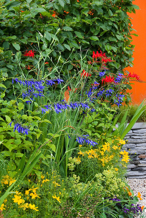 Flower garden mixed perennials and annuals plant flower stock heirloom and old fashioned flowering plants mix of annuals and perennials tropaeolum nasturtiums mightylinksfo