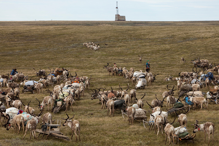 Bovanenkovo ,Yamal Peninsula, Russia, 09/07/2010..An old gas well sits behind as the Nenets, indigenous nomadic reindeer herders, travel on sledges heading north to the Russian Arctic coast with their herd of 5,000 reindeer.