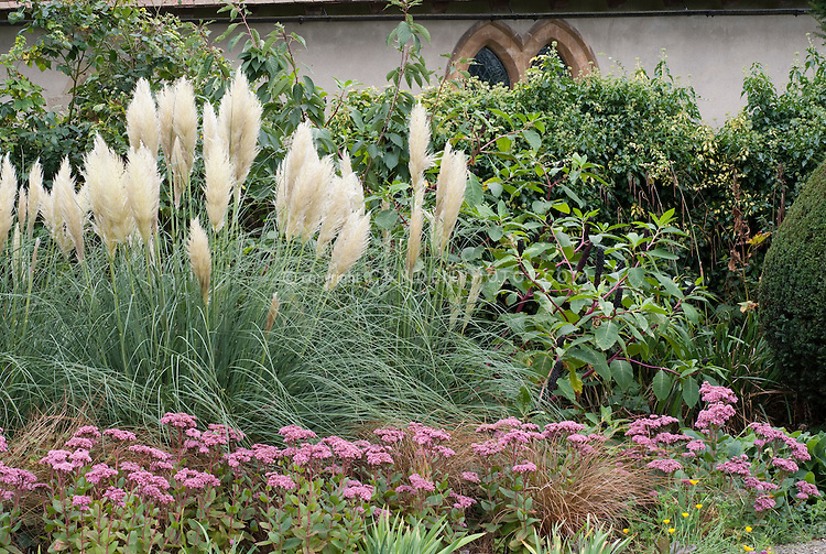 Cortaderia selloana sedum 39 joyce henderson 39 plant for Border grasses for landscaping