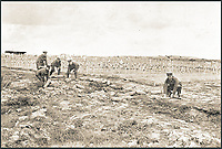 BNPS.co.uk (01202 558833)<br /> Pic: Pen&amp;Sword/BNPS<br /> <br /> Clearing up some shells at Hooge Crater Cemetery.<br /> <br /> A poignant collection of images which were taken by a photographer who documented the graves of fallen soldiers on the Western Front have come to light in a new book.<br /> <br /> Ivan Bawtree was one of only three professional photographers assigned to the the Graves Registration Units to photograph and record the graves of fallen First World War soldiers on behalf of grieving relatives. <br /> <br /> His powerful photos of northern France and Flanders are a haunting reminder of the horrors of war and a fascinating insight into the early work of the Imperial War Graves Commission. <br /> <br /> Prior to the First World War, the casualties of war were generally buried in unmarked mass graves.
