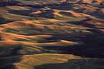 Warm light illuminates the hills of the Palouse as seen from Steptoe Butte in Eastern Washington State.