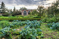France, Sarthe (72), Le Lude, château et jardins du Lude, le potager, l'orangerie et crambés maritimes (Crambe maritima) ou chou marin