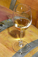 Oak barrel aging and fermentation cellar. Glass of white Corton Grand Cru. Domaine Bertagna, Vougeot, Cote de Nuits, d'Or, Burgundy, France