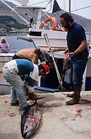 ITALY, Sicily, Egedian island Favignana, La Mattanza, traditional fishing of bluefin Tuna fish, rais (chief) Gioacchino Cataldo