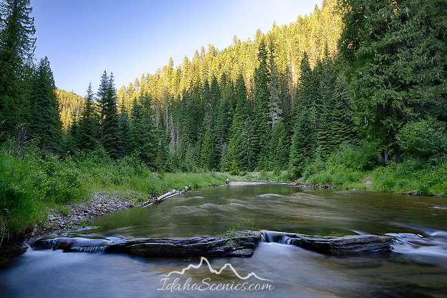 Idaho, North, Kootenai County, Coeur d 'Alene National Forest. Shoshone Creek, a tributary of the Coeur d'Alene River, in evening light of summer.