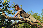A Wichi indigenous boy plays in a tree in Santa Victoria Este, Argentina. The Wichi in this area have struggled for decades to recover land that has been systematically stolen from them by cattleraisers and large agricultural plantations. After years of negotiation supported by Church World Service, a landmark 2014 agreement will divide the land in this region between indigenous communities and settlers, guaranteeing the survival of the Wichi.