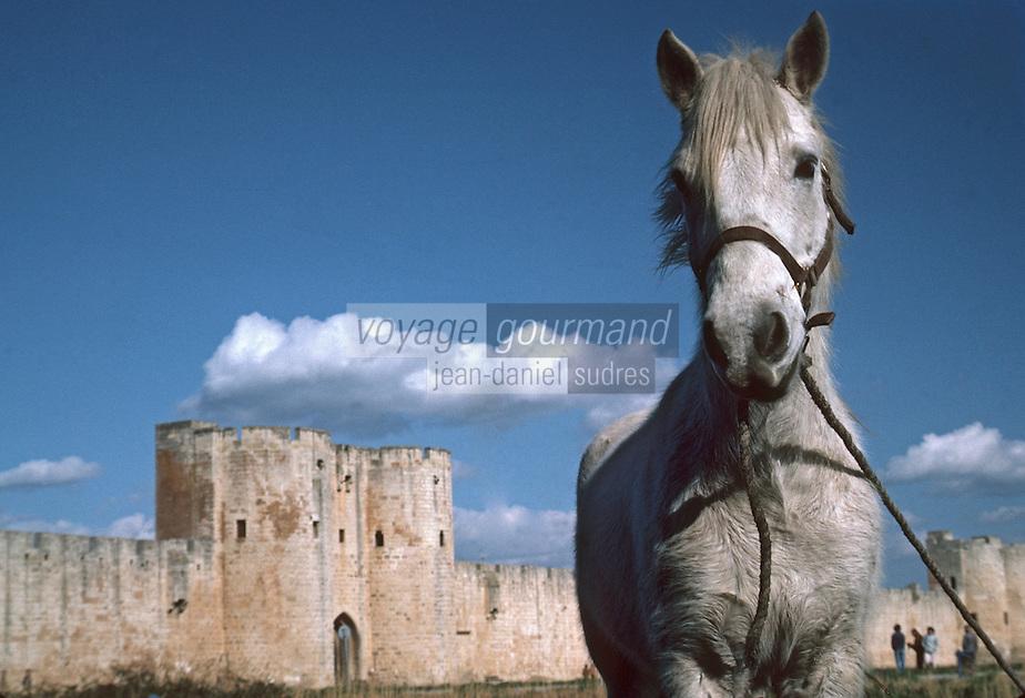 Europe/France/Languedoc-Roussillon/30/Gard/Aigues Mortes: Cheval de Camargue devant les remparts
