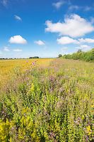 6m field margin with wild flowers - Norfolk, July