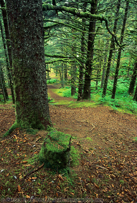 Forest trail through Hemlock trees, Fort Ambercrombie State Park, Kodiak, Alaska