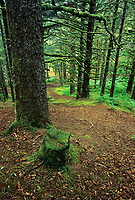 Forest trail through Hemlock trees, Fort Ambercrombie State Park, Kodiak, Alaska
