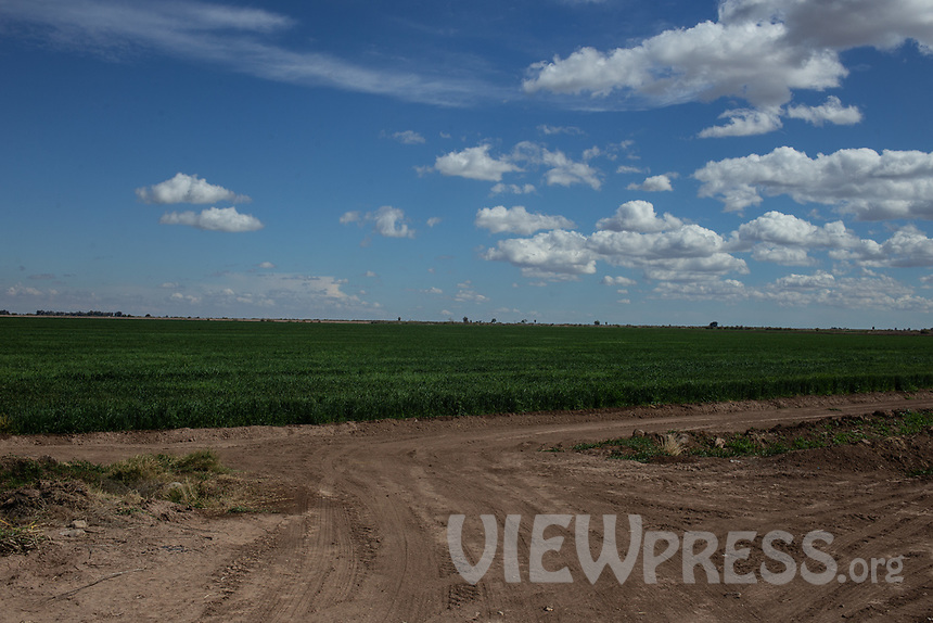 MEXICALI, MEXICO - March 12 . A general view of a wheat crop on March, 2019 in Mexicali, Mexico. 18 liters of water are required for each kilogram of harvested wheat <br /> The rivers usually end in the sea, the Colorado dies in a border. Its the only case like this in the world. There is less water in the Colorado River, hence less water in crops and areas of northern Mexico.  <br /> (Photo by Luis Boza/VIEWpress)