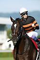 Horse Racing : Kyoto Daishoten 2016