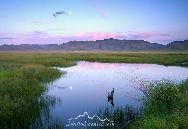 Idaho, South central, Camas County, Fairfield. A full moon reflects in a pond on the Centennial Marsh at dusk.
