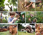 CLIENT: HIGHER NEWHAM FARM  // <br /> PROJECT: PRINT // DESIGN AGENCY: DEWSIGN www.dewsign.co.uk // DESIGNER: ALI BROWN www.studioab.co.uk