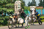 Pictured: Sacks filled with 32 stones in weight of potatoes loaded on bikes in Rwanda.<br /> <br /> Goods as varied as mattresses and cabbages are precariously balanced on bikes and hauled enormous distances to be sold at market stalls.  A series of photos show workers in the Democratic Republic of Congo and neighbouring Rwanda walking up to 20 miles as they transport their wares from small villages and farms to city marketplaces.<br /> <br /> One shot even shows a man riding a motorbike with seven multi-coloured mattresses tied to the back.  Bicycles laden with sacks bursting full of potatoes will weight more than 30 stones, as workers wheel them from their homes to be sold.  SEE OUR COPY FOR DETAILS.<br /> <br /> Please byline: Joe Dordo Brnobic/Solent News<br /> <br /> © Joe Dordo Brnobic/Solent News & Photo Agency<br /> UK +44 (0) 2380 458800