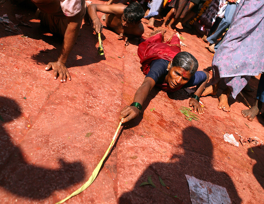 "Yellamma worshippers throws themslves on the ground as a sign of their devotion to the goddess Yellamma after bathing at the Yellamma temple during the Yellamma Jatre (fesival) in Saundatti, India.  In addition to this gesture of worship, young girls from impoverished families are ""married"" to the goddess Yellamma during the full moon festival to appease the goddess.  Once they are married to Yellamma, they are regarded as servants to the goddess and must perfrom temple duties as well as satisfy the sexual needs of the priests and other men.  They may no longer marry a mortal and often end up being sold by unscrupulous priests to pimps who take them to work in the red-light districts of India's urban areas."