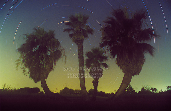 Palm trees and star trails, Rio Grande Valley,Texas, USA