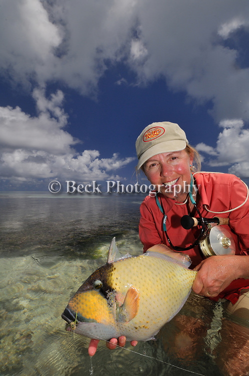 Cathy Beck Trigger fish