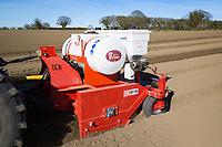 Planting salad potatoes - Suffolk, March