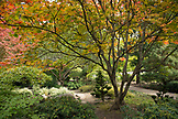 USA, Oregon, Ashland, the Japanese garden in Lithia Park in the Fall