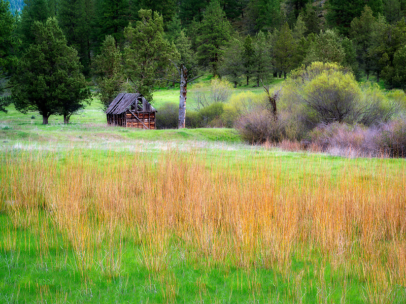 Abandoned cabin, willow and pasture. Near Prinville, OR