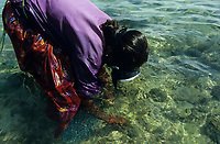 INDIA, Tamil Nadu, Gulf of Mannar <br /> women of fishing village Valasai dive for seaweed for income generation , the algae is used for processing of Agar-agar or Carrageenan / INDIEN, Tamil Nadu, Golf von Mannar, Frauen des Fischerdorf Valasai tauchen nach Seealgen als zusaetzliche Einkommensquelle , aus den Rotalgen werden Agar Agar gewonnen