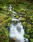 Olympic National Park, WA<br /> A small stream flows over moss covered rocks in Upper Soleduck Valley