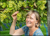 BNPS.co.uk (01202 558833)<br /> Pic: PhilYeomans/BNPS<br /> <br /> Rebecca Hansford of the award winning Furleigh Estate in Dorset.<br /> <br /> Lovely bubbly - 'Perfect' summer for Briish wine.<br /> <br /> Britain's vintners are preparing themselves for a record harvest this year after the hot dry summer has led to huge crop of flavoursome grapes.<br /> <br /> Rebecca Hansford, who runs the vineyard with her husband Ian Edwards, said they average about 50,000 bottles of wine a year but this year they are expecting to make more than 100,000.<br /> <br /> And it's not just quantity, the high temperatures have also led to a better quality fruit which should produce a better tasting wine.