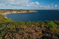 France, Côtes-d'Armor (22), Côte d'Emeraude, Plévenon,  Cap Frehel,     Paysage de lande de bruyères et d' ajoncs depuis le Cap Fréhel vers  Fort-la-Latte , sur le GR 34 / / France, Brittany, Cotes-D'Armor,  Emeraude coast , Cap Frehel, Landscape of moorland and gorse from Cape Freels to Fort la Latte, on the GR 34