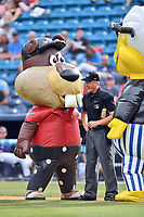 Zooperstars Tiger Woodschuck home plate umpire Reed Basner and and Harry Canary during a game between the Rome Braves and the Asheville Tourists at McCormick Field on June 24, 2017 in Asheville, North Carolina. The Tourists defeated the Braves 6-5. (Tony Farlow/Four Seam Images)