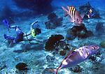 Cozumel-Reef Life