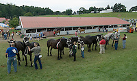 The draft horse competition at the Knox County Fair in Mt. Vernon, Ohio.<br />