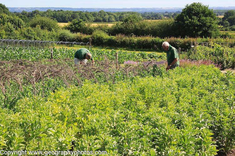 Volunteer workers in the vegetable garden, Sissinghurst castle gardens, Kent, England, UK