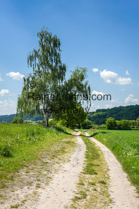 Deutschland, Thueringen, bei Schleusingen: Feldweg | Germany, Thuringia, near Schleusingen: dirt track