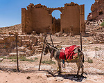 A donkey in front of Qasr el-Bint, the temple of Dushara, in the ruins of the Nabataean city of Petra in the Hashemite Kingdom of Jordan.  Petra Archeological Park is a Jordanian National Park and a UNESCO World Heritage Site.