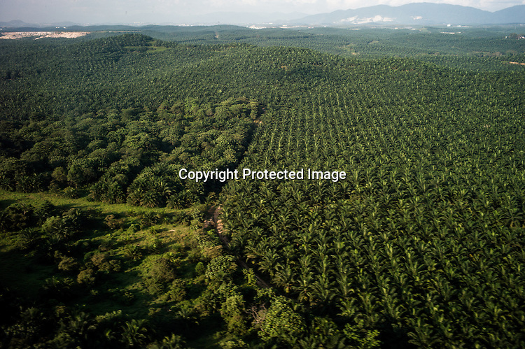 Aerial view of a palm plantation in Malaysia.