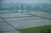 Daytime landscape view from a train of a flooded rice paddy on farmland near Wuhan in Hubei Province.  © LAN