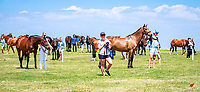 The horses gather for the 1st Horse Inspection. 2017 NZL-Puhinui International 3 Day Event. Auckland. Thursday 7 December. Copyright Photo: Libby Law Photography