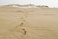footprints on sand dunes in winter, Curonian spit, Nida, Lithuania