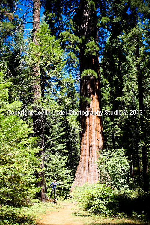 Nelder Grove, Sierra National Forest, Madera County, Oakhurst California, Photos by {The Studio} Yosemite and Joelle Leder Photography Studio ©, <br />