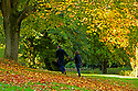 Autumn at Sir Thomas and Lady Dixon Park in South Belfast, 10th October, 2018. The season of the year between summer and winter, during which the weather becomes cooler and many plants become dormant, extending in the Northern Hemisphere from the autumnal equinox to the winter solstice and popularly considered to include the months of September, October, and November; fall. In the Southern Hemisphere autumn includes March, April, and May. A period of maturity verging on decline.<br /> Sir Thomas and Lady Dixon park was bequeathed to the people of Belfast in 1959 by Lady Edith Stewart Dixon and was dedicated to the memory of her husband, the late Sir Thomas Dixon.The first roses were planted in 1964 and the Trial roses were judged for the first time in summer 1965. A permanent panel of judges is provided by the Rose Society of Northern Ireland, formed by Craig Wallace in 1964.