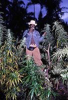 Giamaica, coltivazione di cannabis<br /> Jamaica, cultivation of cannabis
