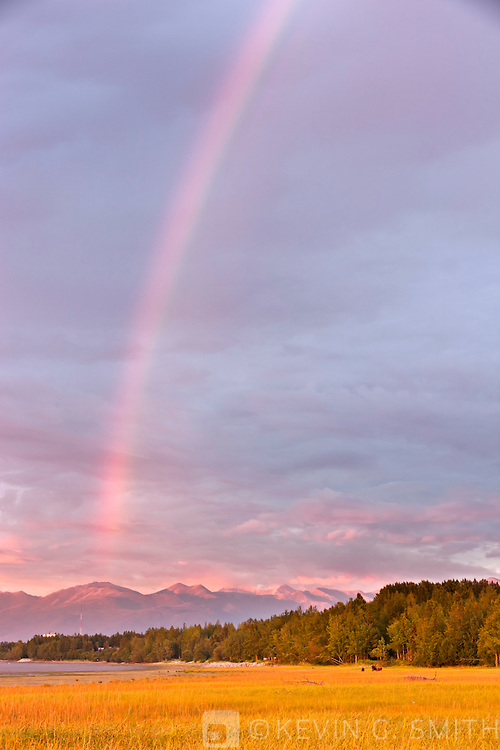 Rainbow over the Chugach Mountains and Knikarm mudflats, moose and two yearling calves grazing in the foreground, alpenglow on the mountains in the background, Anchorage, Southcentral Alaska, Summer.