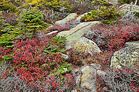 Granite and groundcover foliage, Cadillac Mountain, Acadia National Park, Maine, USA